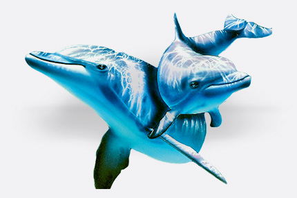 imagen Sticker auto adhesivo Delfines B49